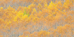 Fall color on Monarch Pass, Colorado.