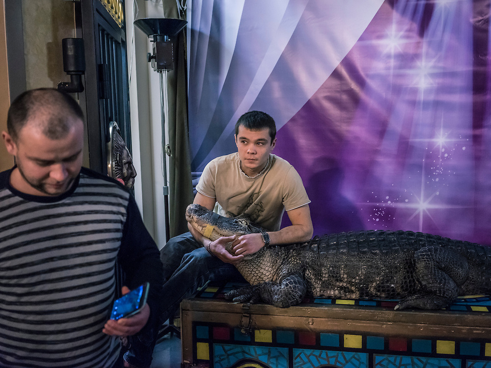 Workers at the Belarus State Circus handle a crocodile named Marta who is available for circus-goers to pose with for pictures on Wednesday, November 25, 2015 in Minsk, Belarus.