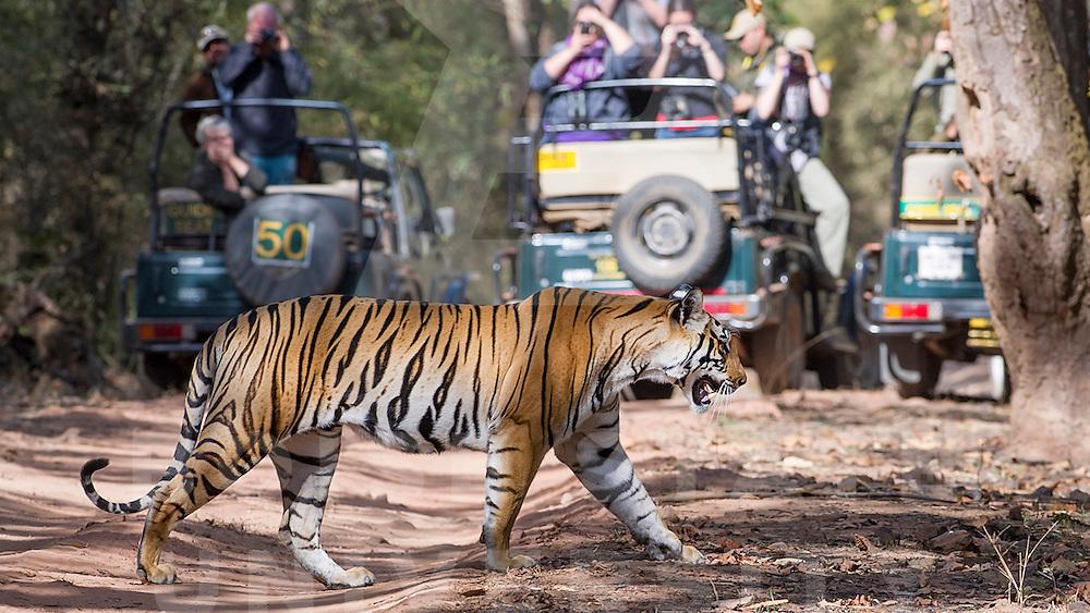 India Spring Break, Delhi, Bandhavgarh,  John Kelly photo