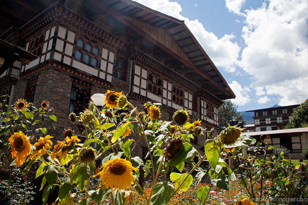 Asia, Bhutan, Thimpu. Sunflowers and Bhutanese architecture.