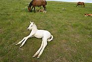 Horses-Colts-Foals