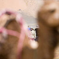 24 March 2007:  Two runner walk behind a camel the day before the beginning of the 22nd Marathon des Sables, a 6 days and 151 miles endurance race with food self sufficiency across the Sahara Desert in Morocco. Each participant must carry his, or her, own backpack containing food, sleeping gear and other material.