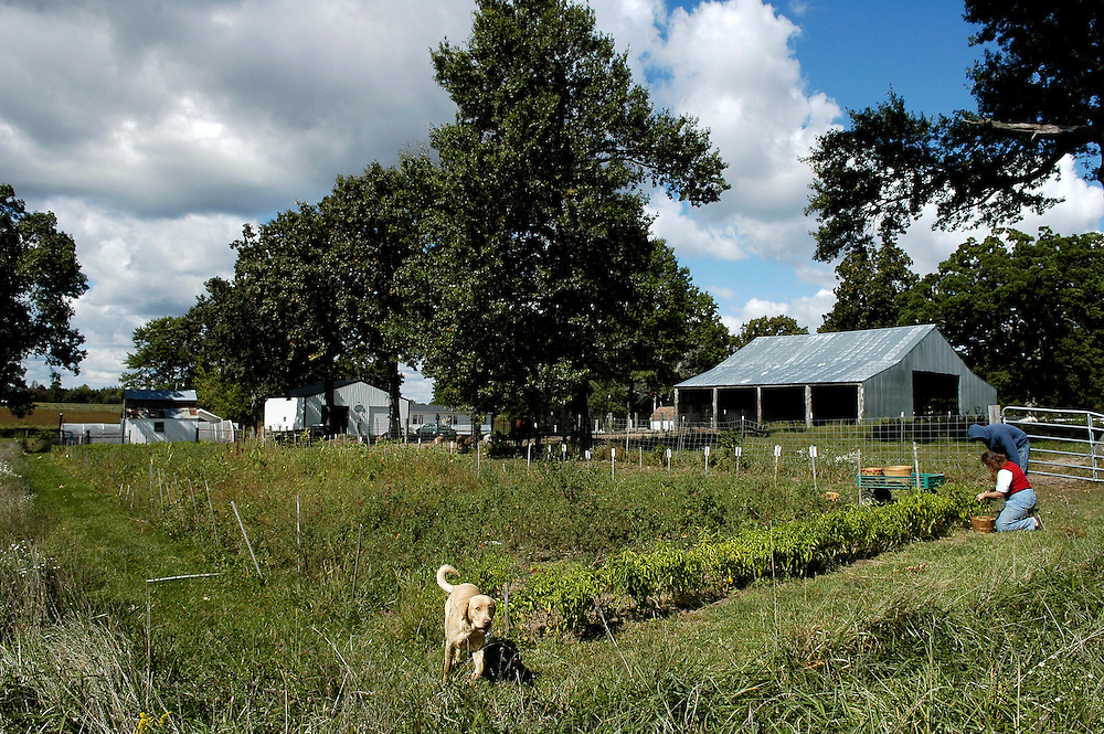 Dan et Joanne Nelson, né dans les années soixante, ont grandi au cœur de l'Amérique rurale dans des fermes familiales du mid-west. En 2004, ils se sont installés, avec leurs quatre fils, sur 15 acres de terre juste à l'extérieur de Moberly, Missouri. Danjo Farm est une ferme familiale inspirée du modèle d'agriculture bio-dynamique, établi en 1924 par l'anthroposophe Rudolph Steiner. Comme près de 600 fermes, les produits des Nelson portent le label « Certified Naturally Grown » créé en 2002 sur l'initiative de Ron Khosla, petit exploitant de la côte Est qui encourage l'échange de conseils entre fermiers et qui garanti qu'aucun insecticide, herbicide, fongicide ou engrais chimique ainsi que aucune semence génétiquement modifiée ne sont utilisés. Les Nelson ont trois moyens de distribution : leur « country store » à leur ferme, le « Farmers'market » de Columbia à 50 km de chez eux où ils se rendent tous les samedi matins depuis avril 2007, et une douzaine de clients en « panier paysan ». Leurs revenus, selon la saison, vont de 600 à 3000 dollars par mois. Chez les Nelson, de l'aube au crépuscule, les adultes comme les plus jeunes s'occupent des animaux, de la terre et du commerce au fil des saisons.