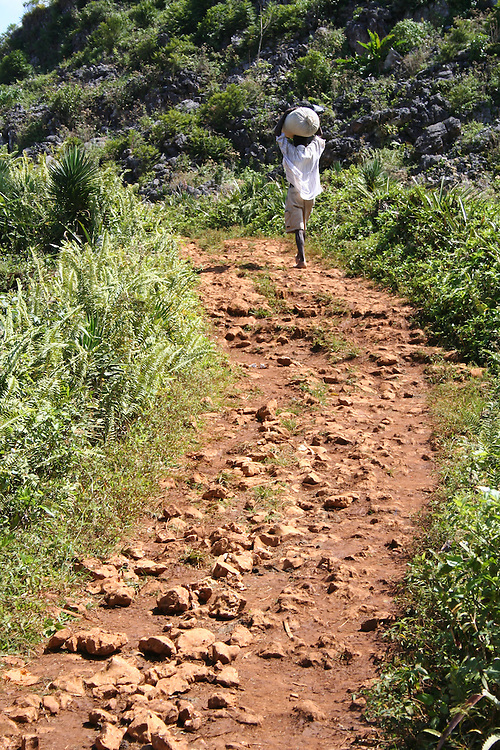 Because people are forced to live hand-to-mouth in Haiti, most farming is for crops such as beans which have immediate, but low, return, but which are not productive in the long-term