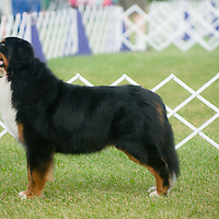 Hickories Circuit Dog Show 2015