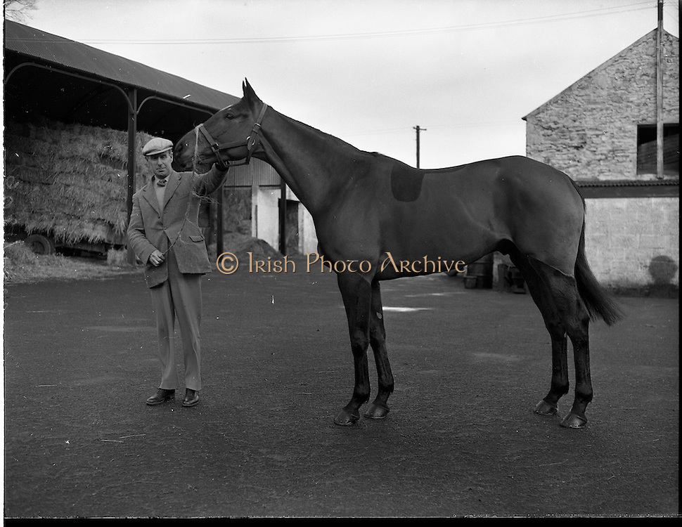 """19/01/1960.01/19/1960.19 January 1960.""""Another Flash"""" with trainer P. Sleator at his stables at Grange Co. Wicklow."""