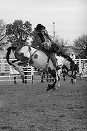 Miles City Bucking Horse Sale 2009