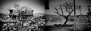 (L): Cherry blossoms have open on a tree that seems to rise right out of the rubble in 2011.  Ofunato, Iwate Prefecture, Japan.<br /> <br /> (R): The same Ofunato cherry tree, fatigued and clinging to life, five years after the tsunami in 2016.  In more way than one, the tree could reflect the collective fatigue of a region that, five years later, is still struggling to put back together communities that the tsunami eviscerated in minutes in 2011.  Ofunato, Iwate Prefecture, Japan.