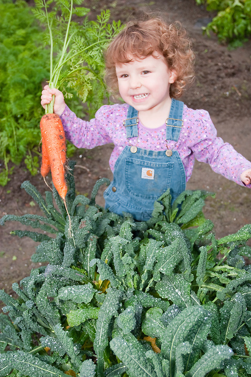 A little girl hold carrots and kale in her garden. MR MRA