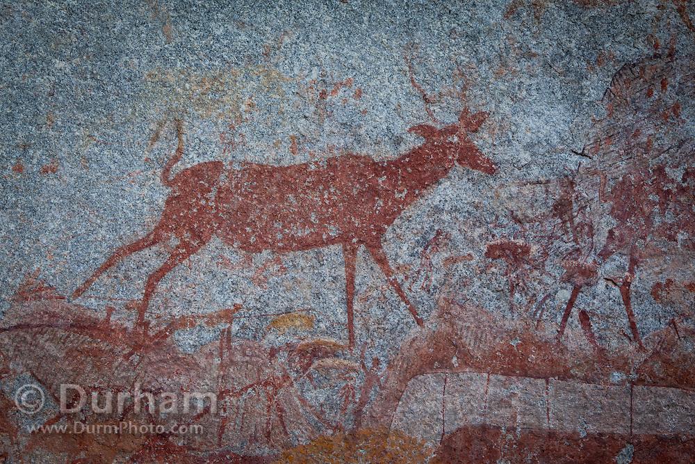 A kudu antelope depicted in San bushman rock paintings, estimated at around 2000 years old, in Nswatugi Cave in Matobo National Park, Zimbabwe.