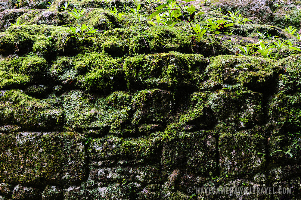 The stones of one of the partially restored buildings at Tikal is covered by moss and small plants. The thick jungle is constantly encroaching up on the buildings in the Tikal Maya ruins in northern Guatemala, now enclosed in the Tikal National Park.