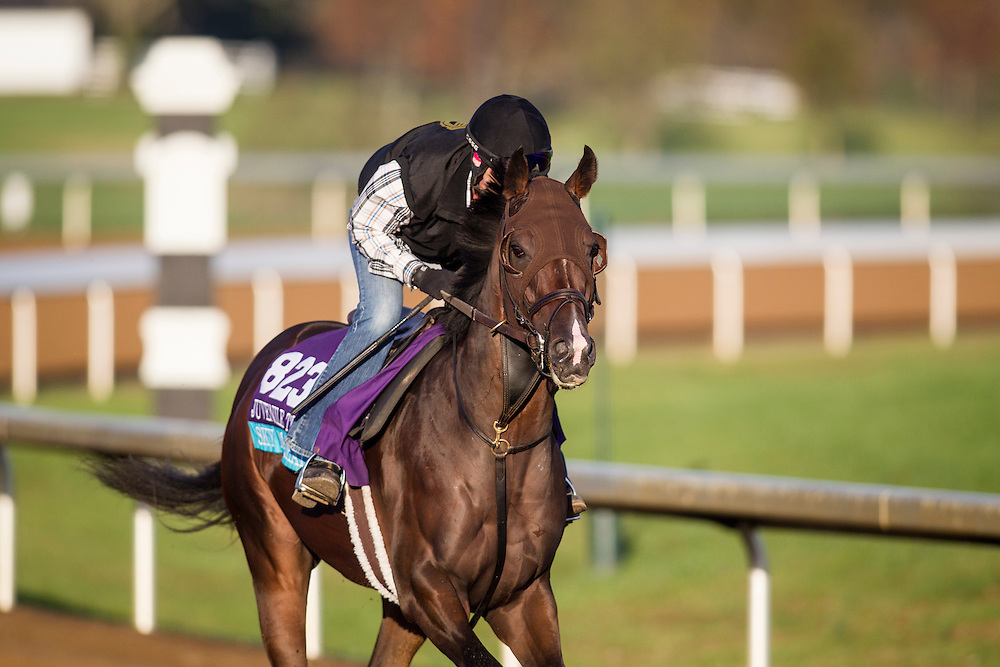 October 29, 2015:   Sky Marshal, trained by Barbara J. Minshall and owned by W. Bruce Lunsford , Barbara Minshall, exercises in preparation for the Breeders' Cup Juvenile Turf at Keeneland Race Track in Lexington, Kentucky. Alex Evers/ESW/CSM