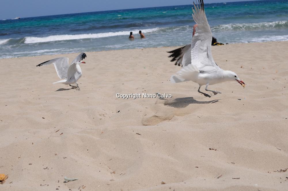 Es Cavallet beach, Ibiza