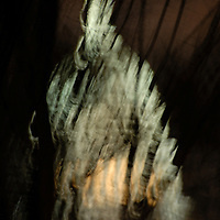 An abstract view of teh U.S. Capitol through tree in the night.