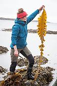 Wild food - Seaweed - Ville vekster