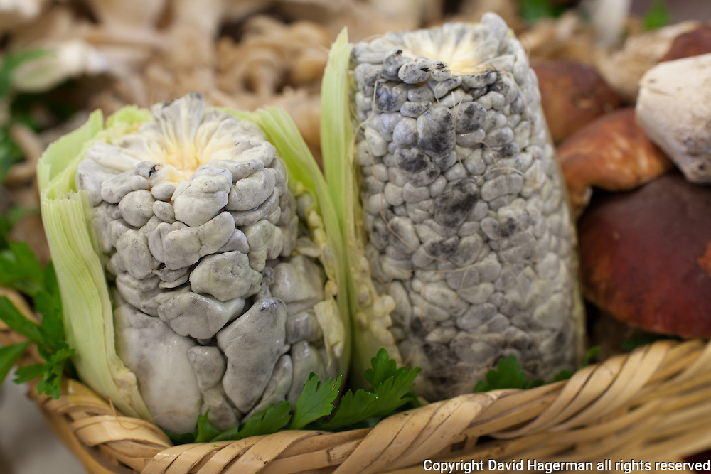 Huitlacoche (corn fungus) is cooked for use in tacos, quesadillas and other dishes. The consumption of corn fungus dates back to Mayan times and is thought to be one of the oldest foods still consumed in Mexico.
