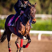 14-0223- Smooth Talker Gallop