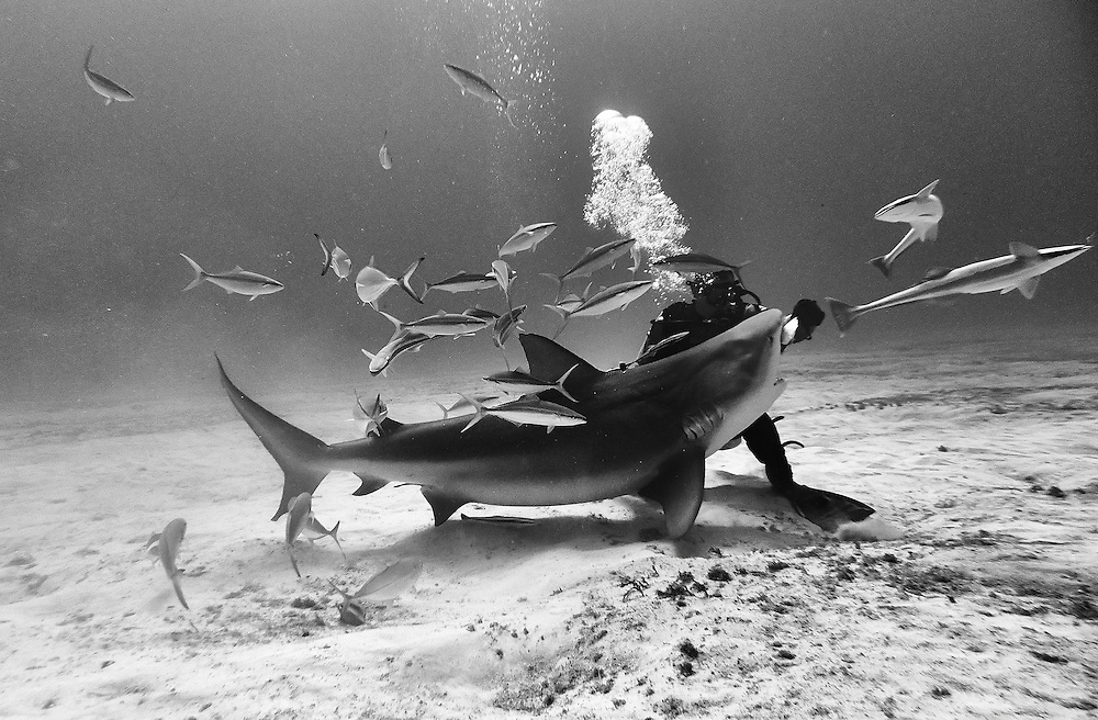 In Playa del Carmen, Mexico, Bull sharks are now common residents.<br /> <br /> This image shows how unlikely is a shark attack against humans, they simply don't care about us so we need to stop fearing them. Killing them just to get their fins to make soup and then trowing back the dying sharks back to the ocean is just one of the most brutal things I have seen a human do to another being.