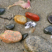 Collection of pebbles at North Beach, just after a wave retreated back into the Strait of Juan de Fuca