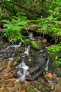 Several small waterfalls along a creek running into the north side of Hicks Lake in Sasquatch Provincial Park, Harrison Hot Springs, British Columbia, Canada
