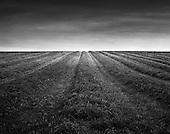 Prairie Portfolio IV