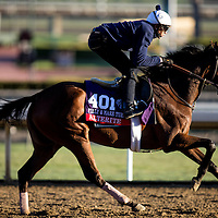 Alerite trains for the Breeders' Cup  Fillies and Mare Turf at Santa Anita Park in Arcadia, California on October 31, 2013. (Alex Evers/ Eclipse Sportswire)
