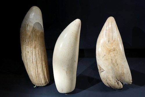 Whales' Teeth | joeburciaga