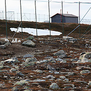 De åtte fjellrevparene på Sæterfjellet avlsstasjon på Oppdal fikk 69 valper i år, og alle skal ut i ulike fjellområder i vinter. Arctic fox (Vulpes lagopus). The most endangered mammal in Scandinavia. It was only about 50 individuals left when they started breeding on wild animals. 2010 is very successfull with 69 from eight couples. All the young ones will be transfered to the wild this winter. Supported with feeding.