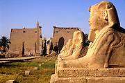 EGYPT, THEBES, LUXOR TEMPLE Avenue of Sphinxes, Great Pylon beyond