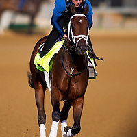 Kentucky Derby contender Overanalyze gallops at Churchill Downs in Louisville, KY on May 02, 2013. (Alex Evers/ Eclipse Sportswire)