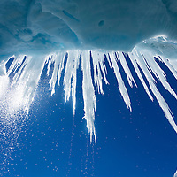 Antarctica, Snow falls behind icicles hanging from roof of glacial ice cave by Gerlache Strait along Antarctic Peninsula