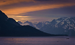A humpback whale surfaces and dives in the Sitakaday Narrows of the main bay of Glacier Bay National Park and Preserve in this view at sunset seen from Young Island located in the Beardslee Islands of the park in southeast Alaska. In the near background is Marble Mountain and in the far background is Mt. Abdallah.