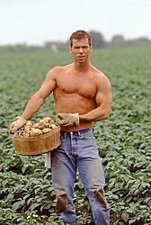shirtless farm worker in a potato field