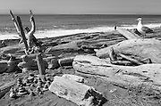 Gull, cairns, logs, and boy on Dungeness Spit.