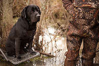 Hunting dog sitting up out of the freezing bayou water, waiting to retrieve ducks for his owner in Keo Arkansas.