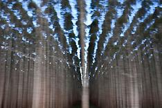Cellulose | Eucalyptus Monoculture