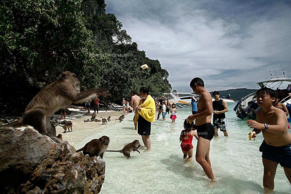 Thailandia , Phi Phi Island , feeding monkeys on Monkey Island