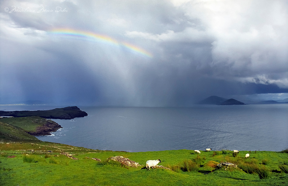 Dramatic Irish Landscape with Stormy Weather and Rain Shower over Ballinskelligs Bay with colourful Rainbow. Group of Sheep on Green Grass Field with Fishermen Boat and the wild Atlantic Cliff Coastline, County Kerry, Iveragh Peninsula Ireland / bs003