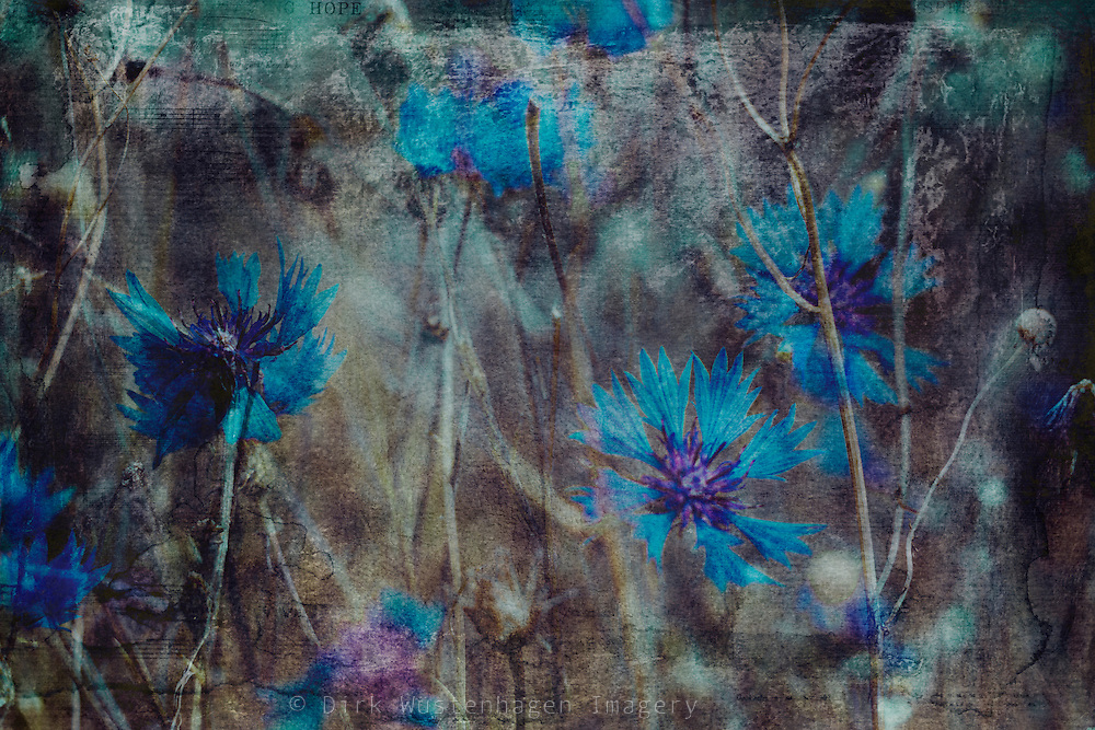 Double exposure of Russian Violets in a field - textured photograph<br />