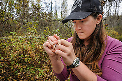 Rachel Wheat, a graduate student at the University of California Santa Cruz, records information onto a vial containing a bear saliva swab sample she collected from a salmon on the banks of the man-made spawning channel of Herman Creek, near Haines, Alaska.<br /> <br /> Wheat is collecting DNA samples of bears from bear saliva left on salmon carcasses as part of research for her doctoral dissertation. She hopes to determine if partially-consumed salmon carcasses can serve as a viable source for bear DNA to genotype individuals. She also looking to determine a minimum population estimate for the number of bears using the Chilkoot Valley and the ratio of males to females, particularly in light of increase human presence. <br /> <br /> The bear DNA collection is part of her dissertation which looks at how the availability of salmon affects eagle movement, bear activity, and subsistence fishermen. EDITORS NOTE: Images of Wheat capturing bald eagles for the bald eagle portion of her study are available here: http://denglerimages.photoshelter.com/gallery/Bald-eagle-research-Chilkat-River-eagle-migration-study/G0000GTyPvah7eiQ/<br /> <br /> During late fall, bald eagles congregate along the Chilkat River to feed on salmon. This gathering of bald eagles in the Alaska Chilkat Bald Eagle Preserve is believed to be one of the largest gatherings of bald eagles in the world.