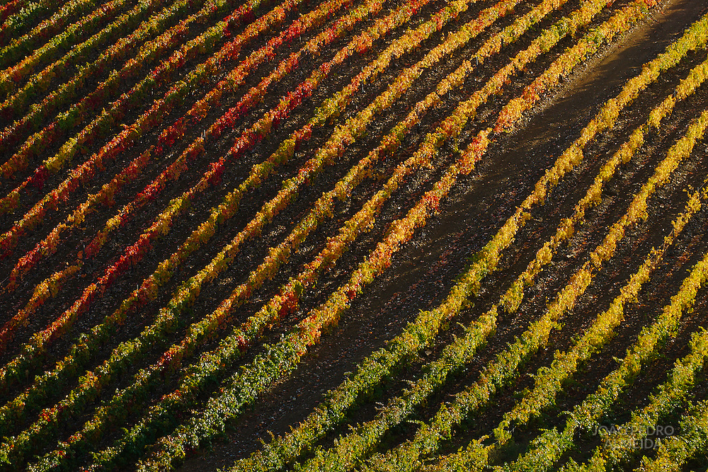 Colorful vineyards at Douro valley
