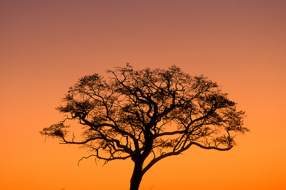 Africa, Botswana, Chobe National Park, Setting sun silhouettes tree in Savuti Marsh near Kwando Pan