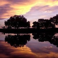 Live Oaks reflection in lake at sunrise, Sarsota, Florida