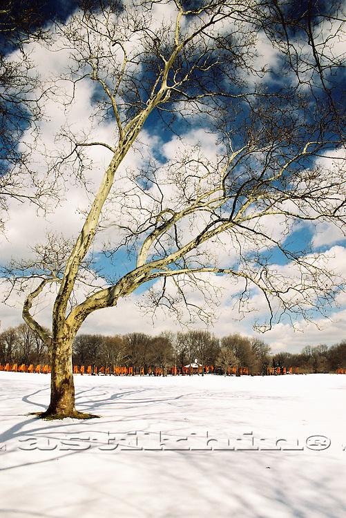 Tree on Sheep Meadow