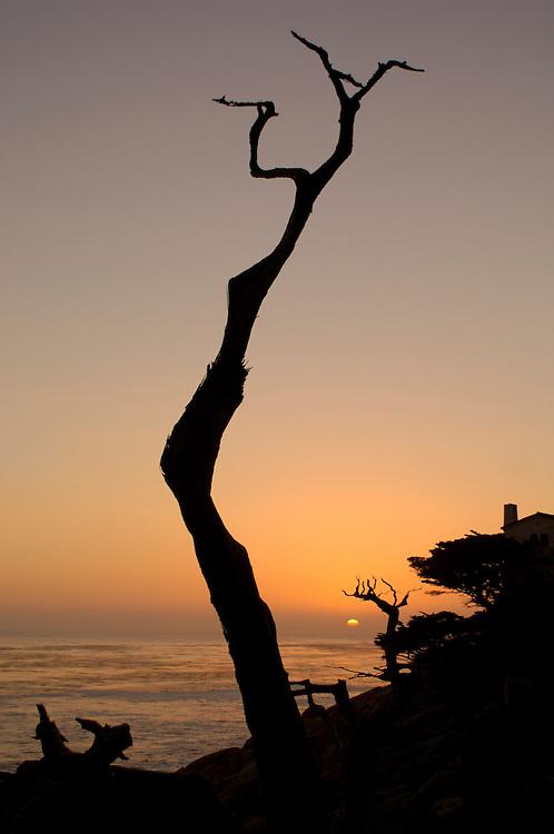 Sunset at Pesadero Point, Pebble Beach, 17 Mile drive, Monterey Peninsula, Monterey, California, United States of America