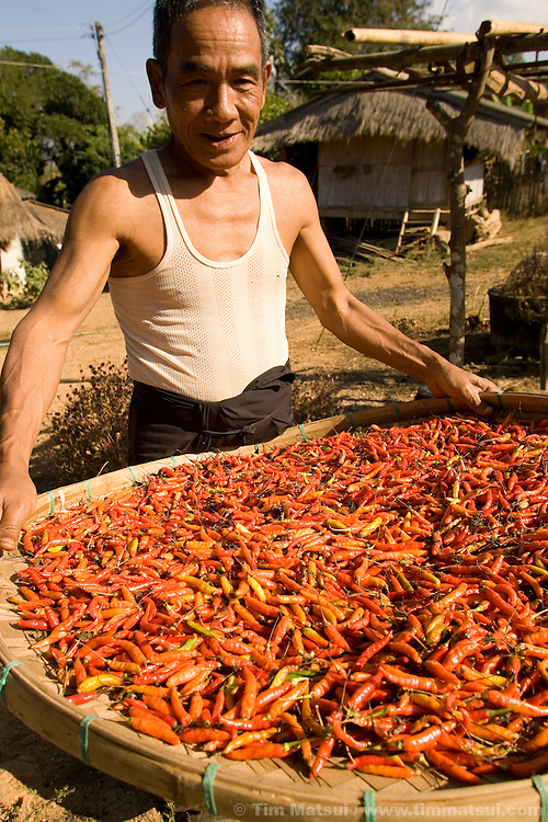 MAE SAI, THAILAND - An elderly man holds a basket of hot chilies in the Akha hill tribe village of Senjai, on 9 January, 2007, near Mae Sai, Thailand.