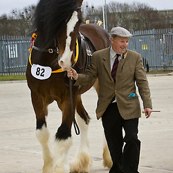 Mr R Sumner's  Bay Stallion  Wheathead Bowes Lyon   f 2002<br /> s   Blackden Charlie<br /> d   Wheathead Pendle Gem<br /> Bred by owner