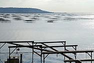 France, Languedoc Roussillon, Hérault, Bouzigues, conchyliculture, élevage d'huitres et de moules