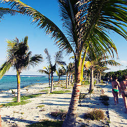 Walking the trail along the ocean in the Mexican Riviera Maya, many palm trees line the rocky shore.