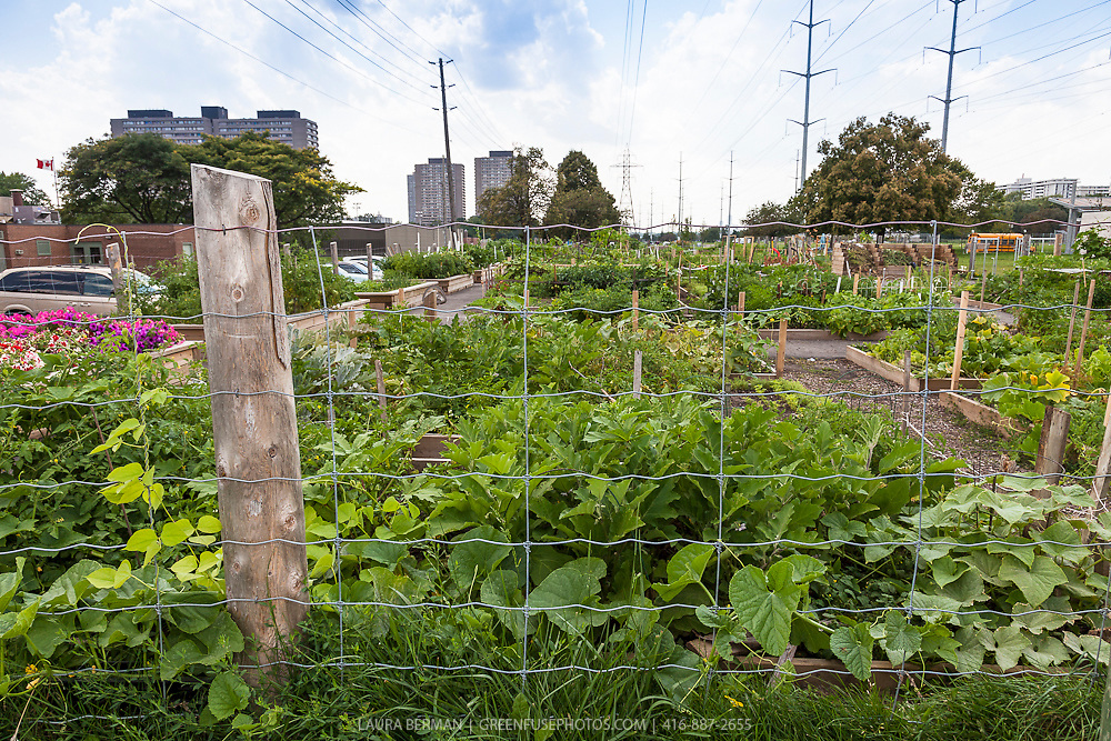 Urban Community Garden images